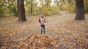 Маленькая девочка сгребает желтые листья в большую кучу с помощью грабл видеоматериал