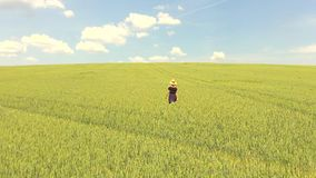 Маленькая девочка счастливо идя внутри через поле пшеницы акции видеоматериалы
