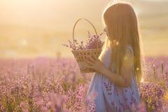 Маленькая девочка с корзиной в поле лаванды стоковые изображения