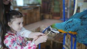 Маленькая девочка с мамой в petting зоопарке кормить попугая ары сток-видео