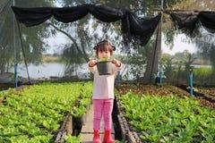 Маленькая девушка фермера держа молодой бак салата в заводах салата стоковое изображение