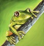 Маленькая жаба Стоковое Изображение RF