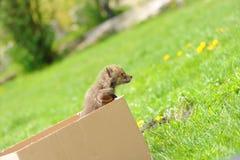 Маленькая лисица Стоковые Фото