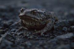 Маленькая лягушка изверга стоковое изображение rf
