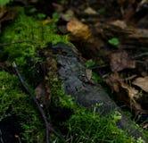 Маленькая лягушка младенца Стоковая Фотография