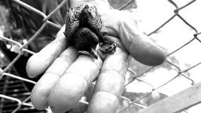 Маленькая милая newborn птица младенца сток-видео