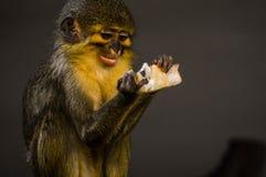 маленькая обезьяна еды Стоковые Изображения