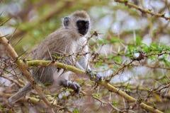 Маленькая обезьяна на дереве Стоковое фото RF