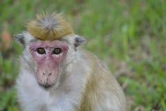 Маленькая обезьяна самостоятельно Стоковые Изображения RF