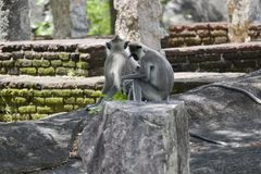 Маленькая обезьяна самостоятельно Стоковое Изображение RF