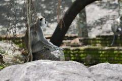 Маленькая обезьяна самостоятельно Стоковая Фотография RF