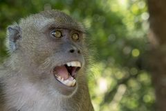 Маленькая обезьяна Стоковое фото RF