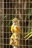 маленькая обезьяна Стоковое Изображение