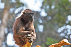 Маленькая обезьяна Стоковая Фотография RF