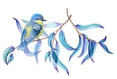 Маленькая птица на ветвях евкалипта стоковое изображение