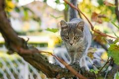 Маленькая серая игра кота на дереве виноградного вина Стоковые Изображения RF