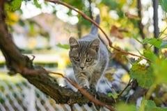 Маленькая серая игра кота на дереве виноградного вина Стоковое Изображение RF