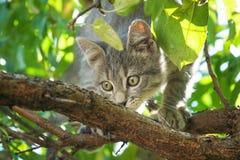 Маленькая серая игра кота на дереве виноградного вина Стоковая Фотография