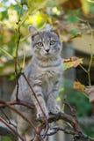 Маленькая серая игра кота на дереве виноградного вина Стоковые Фото