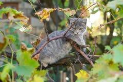 Маленькая серая игра кота на дереве виноградного вина Стоковое фото RF