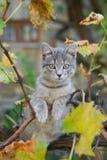 Маленькая серая игра кота на дереве виноградного вина Стоковое Изображение