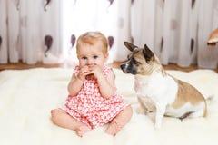 Маленькая смешная кавказская девушка ребенок сидит дома на поле на светлом ковре с лучшим другом собаки полу-породы с Стоковые Изображения