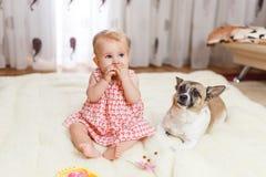 Маленькая смешная кавказская девушка ребенок сидит дома на поле на светлом ковре с лучшим другом собаки полу-породы с Стоковая Фотография RF