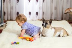 Маленькая смешная кавказская девушка ребенок сидит дома на поле на светлом ковре с лучшим другом собаки полу-породы с Стоковые Изображения RF