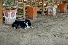Маленькая собака спит стоковые фотографии rf