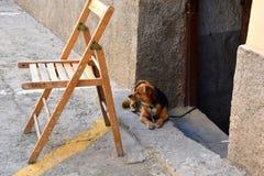 Маленькая собака шавки, связанная внутри дома, наблюдая улицу стоковые фотографии rf