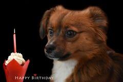 Маленькая собака щенка на его первом дне рождения стоковое фото
