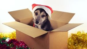 Маленькая собака щенка сидя в картонной коробке с украшениями рождества и Нового Года Стоковое Фото
