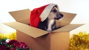 Маленькая собака щенка сидя в картонной коробке с украшениями рождества и Нового Года Стоковые Фотографии RF