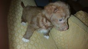 Маленькая собака стоковое фото rf