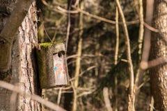 Маленькая таблица птицы на большом старом дереве Стоковое фото RF