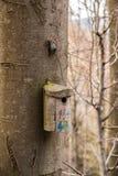 Маленькая таблица птицы на большом старом дереве Стоковые Изображения RF