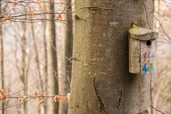 Маленькая таблица птицы на большом старом дереве Стоковые Фото