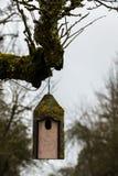 Маленькая таблица птицы на старом мшистом дереве Стоковые Фото