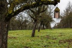 Маленькая таблица птицы на старом мшистом дереве Стоковые Фотографии RF