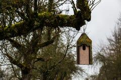Маленькая таблица птицы на старом мшистом дереве Стоковое Изображение