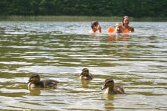 Маленькая утка и дети играя совместно стоковые изображения rf