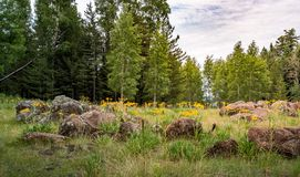 Маленькая часть рая леса стоковое изображение rf