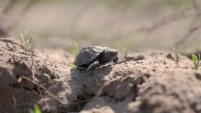 Маленькая черепаха идет в солнечный свет акции видеоматериалы