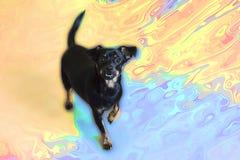 Маленькая черная собака на предпосылке цветов стоковое фото