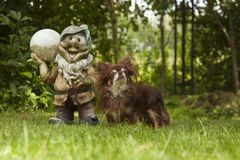 Маленькая pedigreed собака стоит на зеленой траве Стоковые Изображения