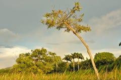 Маленькие джунгли Стоковые Изображения RF