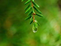 Маленькие зеленые вещи Стоковое Фото