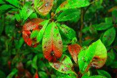 Маленькие зеленые вещи Стоковое фото RF