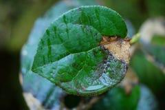 Маленькие зеленые вещи Стоковая Фотография RF