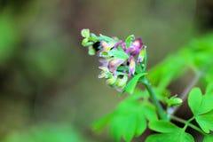 Маленькие зеленые вещи Стоковые Фото